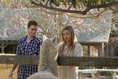 Coppie allo zoo di coccole Fotografia Stock