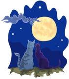 Coppie amorose dei gatti nella notte Fotografia Stock