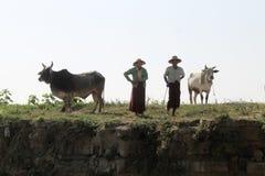Coppie anziane birmane con il loro cettle fotografie stock