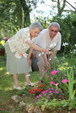 Coppie anziane in giardino Fotografia Stock Libera da Diritti