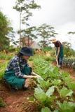 Coppie asiatiche che lavorano al giardino del cortile Immagini Stock