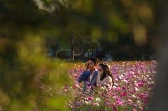 Coppie asiatiche sul campo di fioritura Immagine Stock Libera da Diritti
