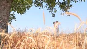 Coppie che baciano nel campo stock footage