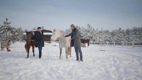 Coppie che camminano con i cavalli all'aperto su un ranch del paese nell'inverno Cavalli principali della donna e dell'uomo stock footage