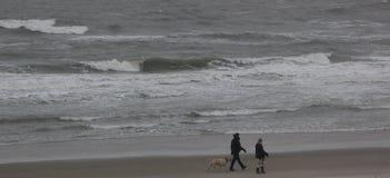 Coppie che camminano con il cane Immagini Stock Libere da Diritti