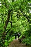 Coppie che camminano nella foresta Fotografie Stock