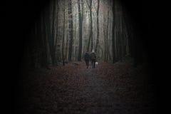 Coppie che camminano in una foresta scura Immagine Stock
