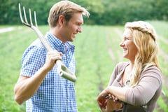 Coppie che lavorano nel campo sull'azienda agricola organica Fotografia Stock Libera da Diritti