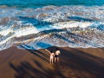 Coppie che si tengono per mano sull'antenna della spiaggia fotografia stock libera da diritti