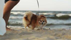 Coppie con il cane che cammina lungo la spiaggia Il mare ? su fondo archivi video