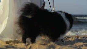Coppie con il cane che cammina lungo la spiaggia Il mare ? su fondo video d archivio