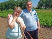 Coppie degli agricoltori 2 Immagine Stock Libera da Diritti