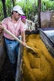 Coppie degli agricoltori dello zucchero bruno Immagine Stock
