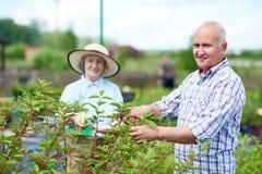 Coppie degli agricoltori senior felici in giardino Fotografia Stock Libera da Diritti