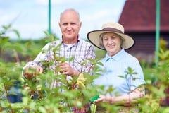 Coppie degli agricoltori senior in giardino Immagine Stock Libera da Diritti