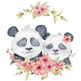 Coppie degli orsi di panda dell'acquerello nell'illustrazione di amore con l'animale sveglio della decorazione dei fiori di sakur illustrazione di stock