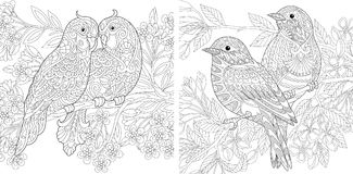 Coppie degli uccelli della primavera nell'amore illustrazione di stock