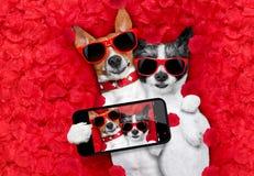 Coppie dei biglietti di S. Valentino dei cani nell'amore Fotografie Stock Libere da Diritti