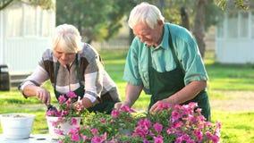 Coppie dei giardinieri anziani archivi video