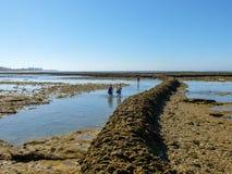 Coppie dei pescatori che camminano sull'acqua Immagine Stock