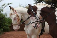 Coppie del cavallo Fotografie Stock