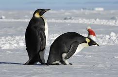 Coppie del pinguino su natale Fotografia Stock Libera da Diritti