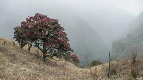 Coppie del rododendro Fotografia Stock Libera da Diritti