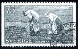 Coppie dell'azienda agricola che piantano le patate fotografia stock