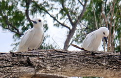 Coppie dell'uccello. Tristezza, offesa. immagine stock libera da diritti