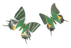 Coppie della farfalla Fotografia Stock