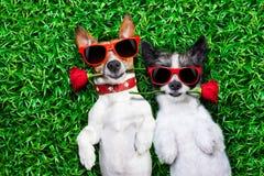 Coppie di amore dei cani immagine stock libera da diritti