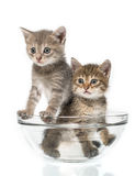 Coppie di piccoli gattini Immagine Stock