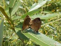 Coppie eleganti le farfalle Immagini Stock Libere da Diritti