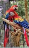 Coppie gli uccelli fotografie stock