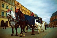 Coppie i cavalli Immagine Stock