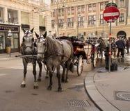 Coppie i cavalli di trasporto a Vienna, Austria Fotografia Stock Libera da Diritti