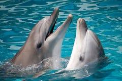 Coppie i delfini in acqua Fotografia Stock Libera da Diritti