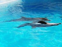 Coppie i delfini di dancing Fotografia Stock