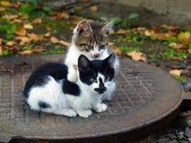 Coppie i piccoli gattini Immagine Stock