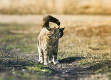 coppie il gatto sveglio che stanno sul prato e che guardano in avanti a fotografia stock