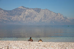 Coppie le anatre sul lago Garda Immagini Stock