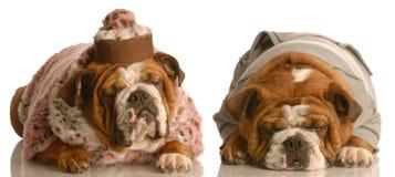 Coppie maggiori del cane Fotografie Stock Libere da Diritti