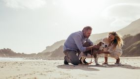 Coppie mature con il cane di animale domestico sulla spiaggia fotografie stock libere da diritti