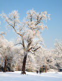 Coppie nella neve Fotografie Stock