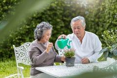 Coppie senior asiatiche che godono con la piantatura del fiore fotografie stock