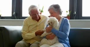 Coppie senior che viziano cane stock footage