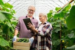 Coppie senior con i cetrioli ed il pc della compressa sull'azienda agricola Immagine Stock Libera da Diritti