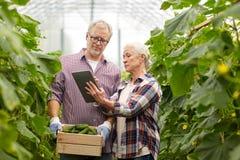 Coppie senior con i cetrioli ed il pc della compressa sull'azienda agricola Immagine Stock