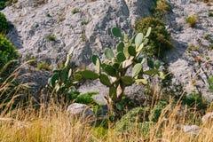 Coppie spinose del cactus Fotografia Stock Libera da Diritti