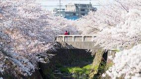 Coppie sul ponte con il fiore di ciliegia, Nagoya immagini stock